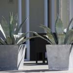 GKR Pflanzen kaufen und Pflanzen mieten