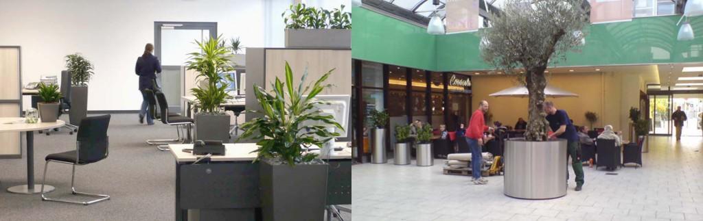 Pflanzenservice und Pflanzenpflege von GKR